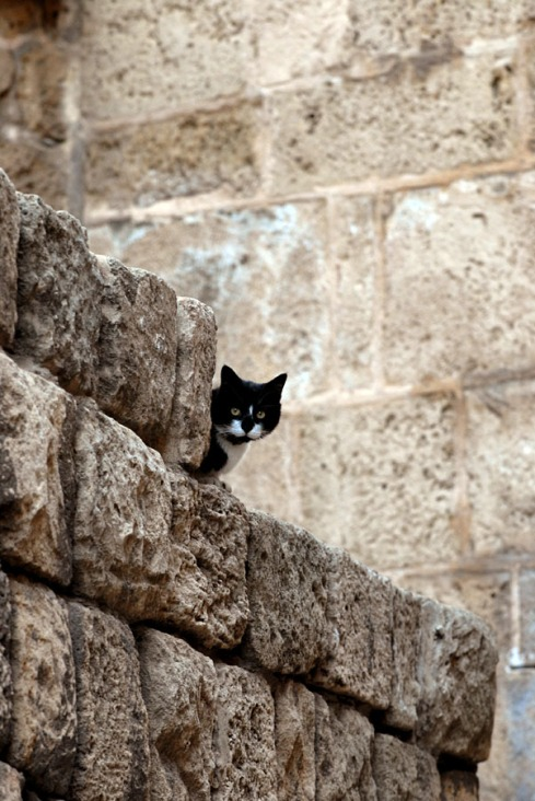cat-jaffa-wall