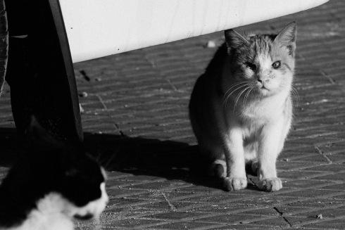 1 eyed cat